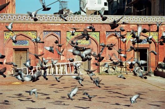 Pigeons, pigeons everywhere!